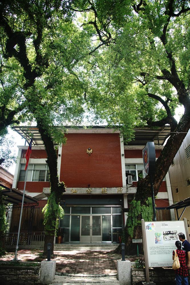 甲仙分駐所前的百年樟樹。