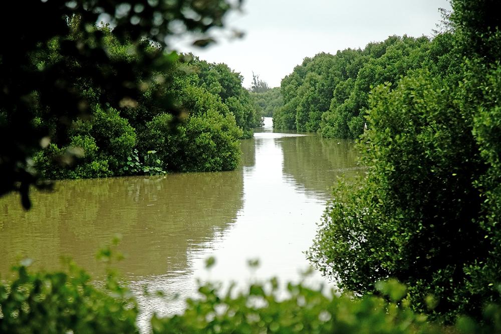 援中港濕地類型以沿海養殖魚塭和潮溝的紅樹林為主。