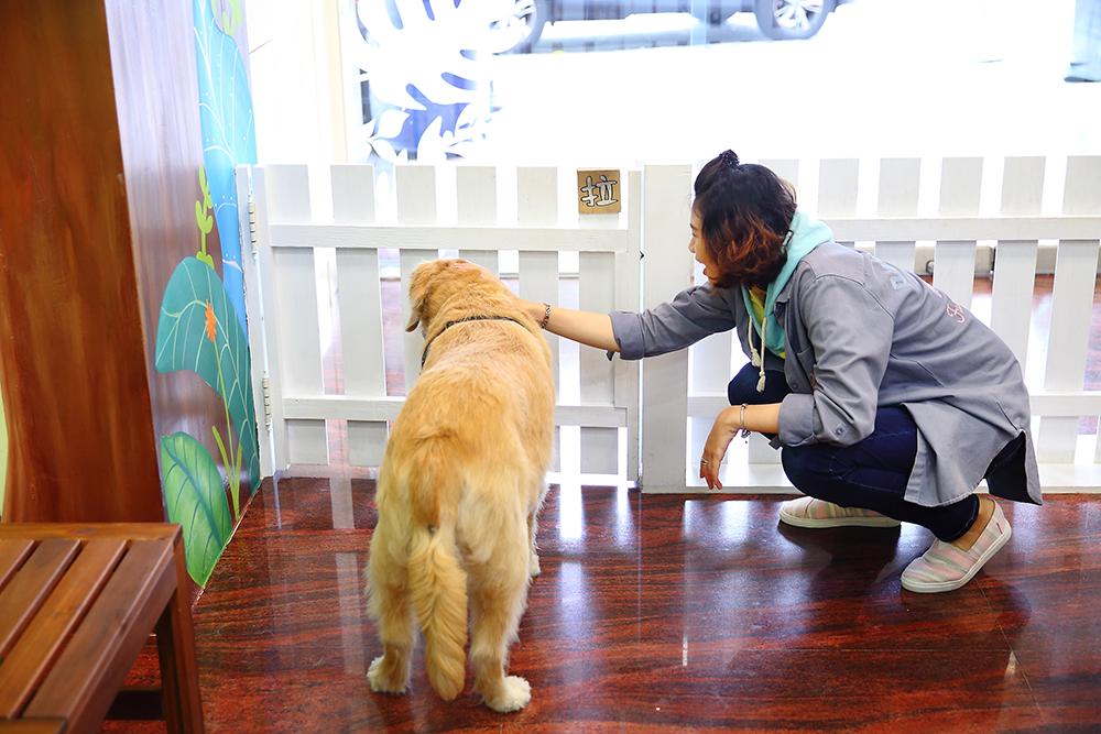 門口的柵欄可以適度阻擋暴衝的狗狗,讓主人與狗狗都能安心在室內。