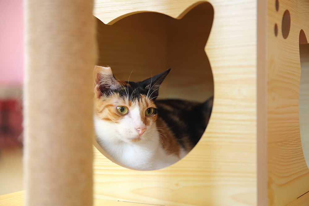 因應貓咪喜愛躲藏的個性,店內也有箱子可以讓貓咪躲在裡頭。