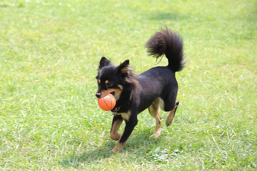 選擇適當的玩具陪伴狗狗。