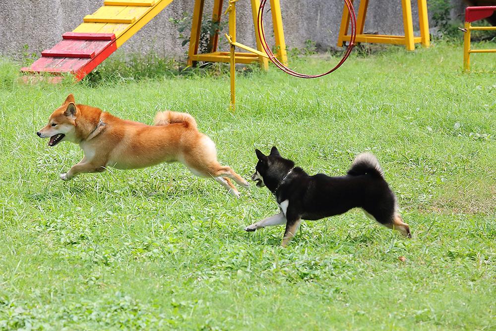帶狗狗外出接觸其他人與動物,也能讓狗狗建立社會化的能力,比較不容易產生攻擊行為。