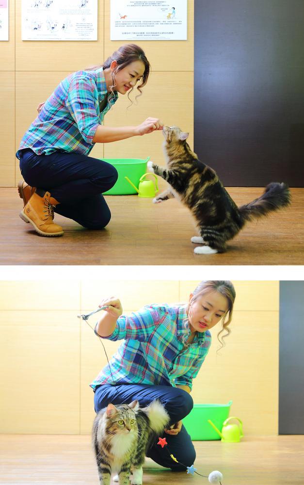 貓咪的天性就有狩獵本能,而被養在家中的貓咪,更需要選擇對的玩具來陪伴牠們,而非用手或腳陪牠們玩耍。