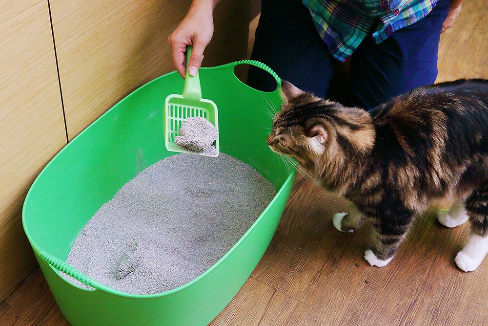 貓咪是很重視清潔度的動物,勤清貓砂是最基本的。