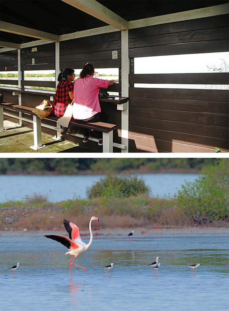 (上)永達路、鹽保路兩地皆設有賞鳥亭。(攝影/曾信耀)(下)被喻為「候鳥界名模」的大紅鶴去年首度現身永安濕地,帶來驚喜。