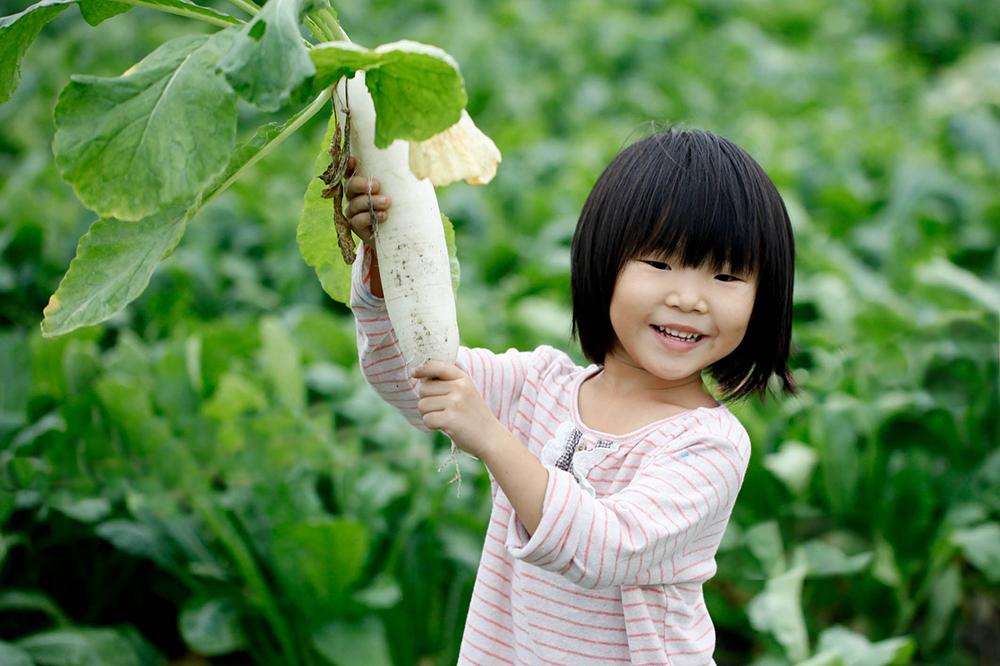 每年十月下旬登場的蘿蔔股東會、蘿蔔自由行,讓大人小孩走進田間,實地體會動手拔蘿蔔的樂趣。(圖片提供/美濃區農會)