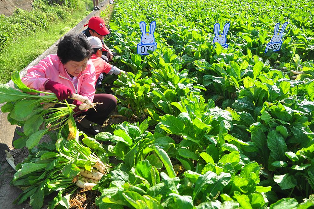 拔蘿蔔股東活動體驗。(圖片提供/美濃區農會)