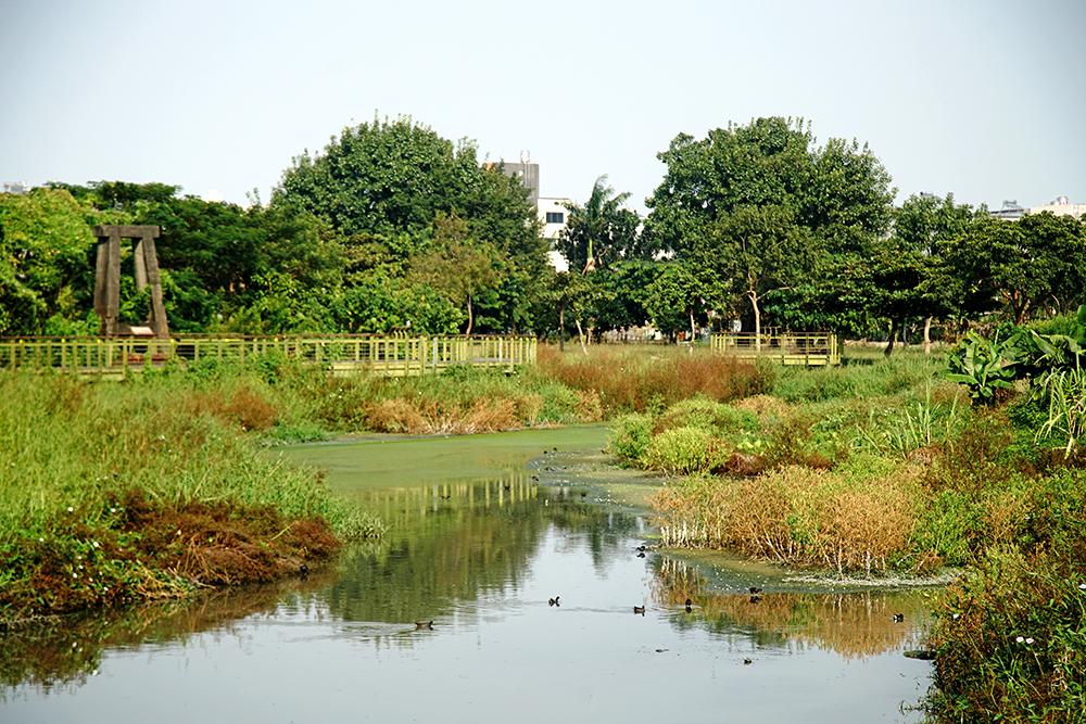 以濕地公園生態廊道回復九番埤灌溉與儲水池風貌,埤塘水域也成為水鳥的天堂。(攝影/曾信耀)
