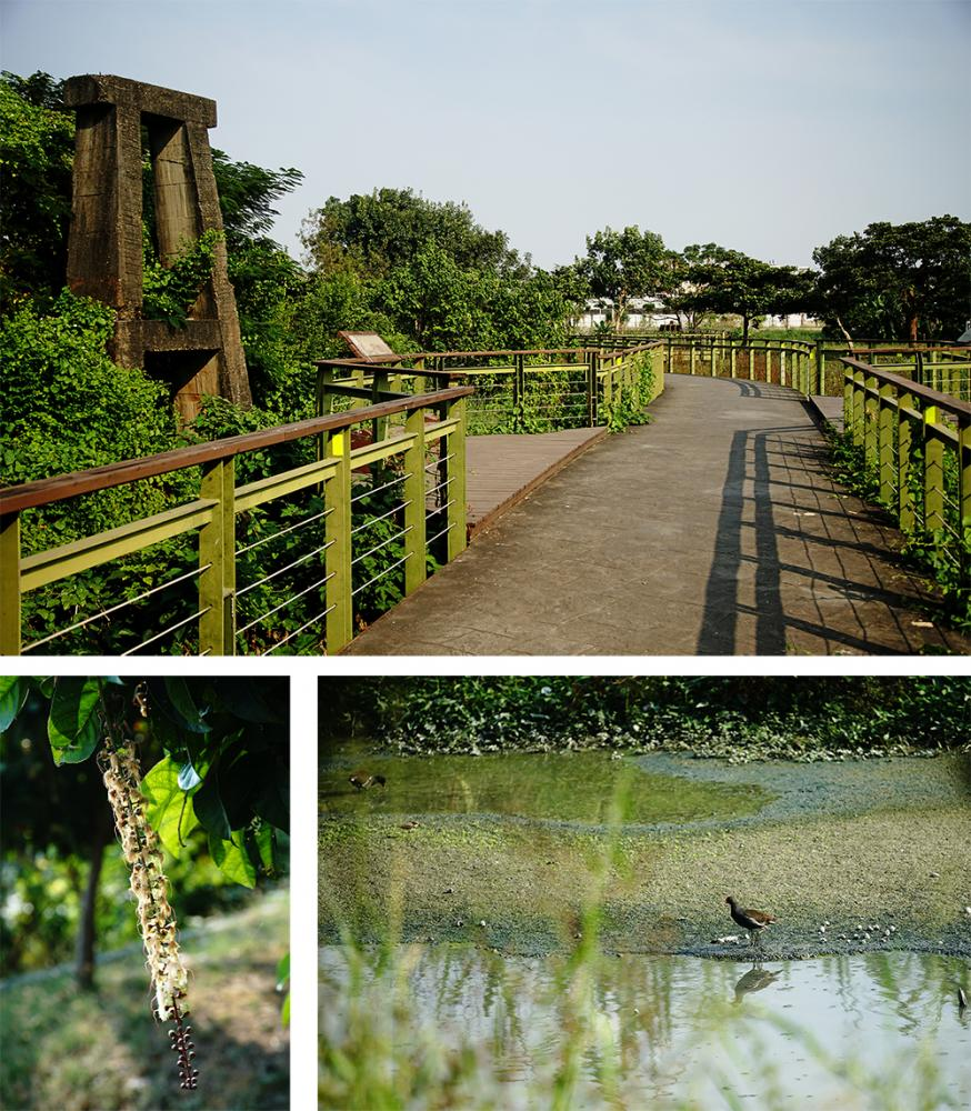 九番埤濕地公園遊園步道在冬日暖陽之下,散步十分舒爽愜意。(攝影/曾信耀)