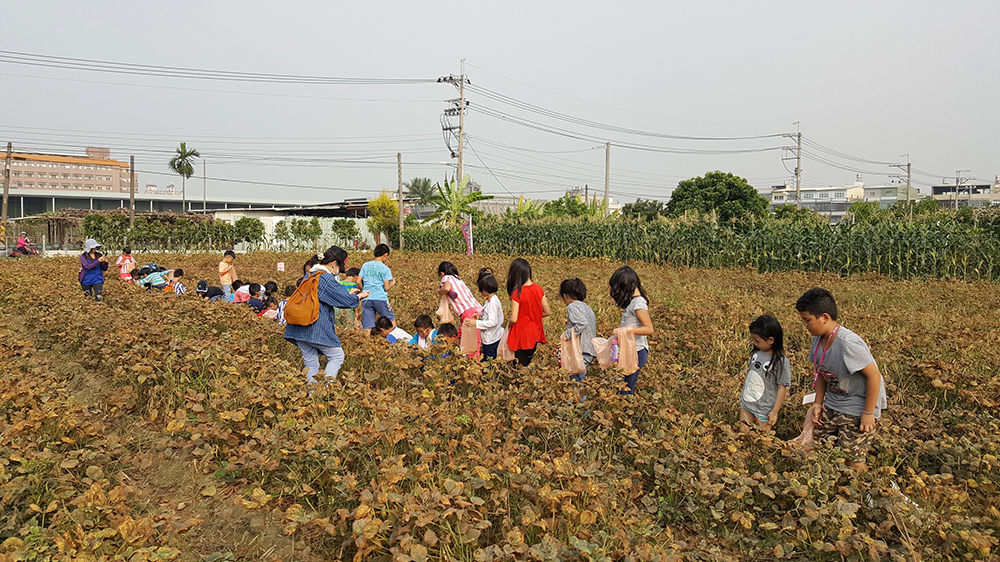 在紅豆播種前與採收時,開放讓孩子們走進農田裡親手接觸紅豆。(照片提供/大寮區公所)