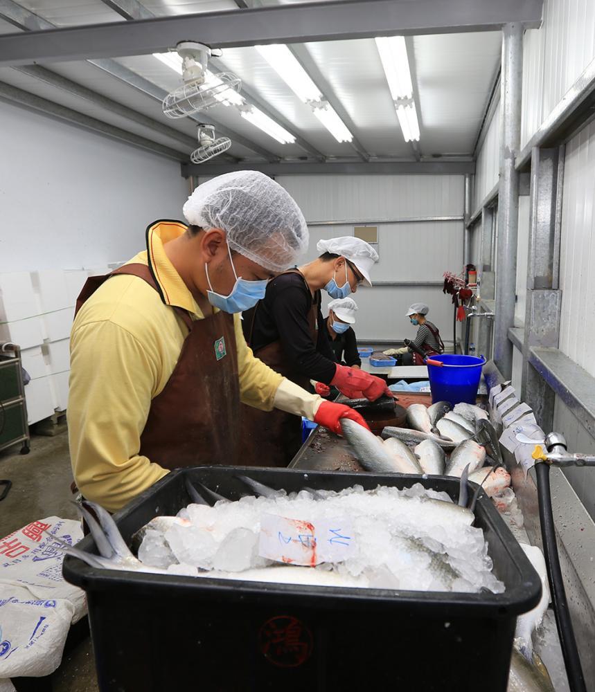 虱目魚加工廠。(攝影/胡靖宇)