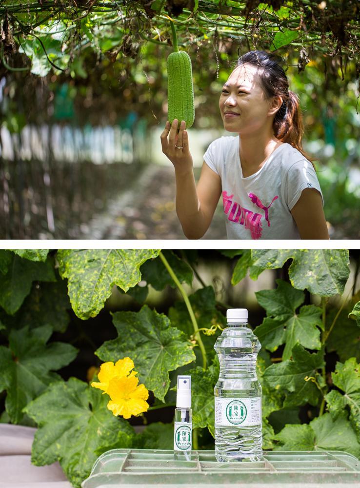 陳雅玲將「陳家絲瓜水」經營得有聲有色。(攝影/連偉志)