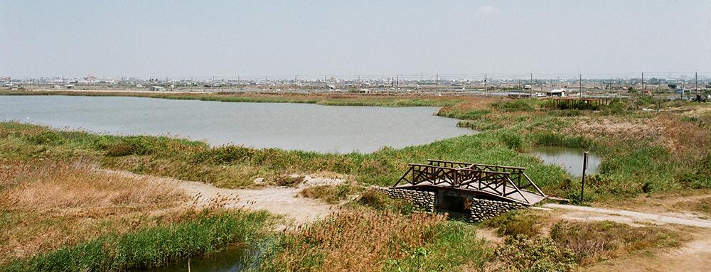 茄萣濕地。(攝影/畝嘰斗)