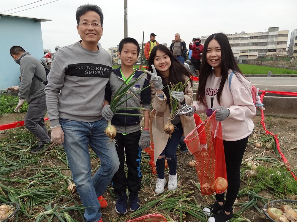 往年盛產季節,林園區會舉辦洋蔥節開放大家來參與採收洋蔥。(圖片提供/林園區區公所)