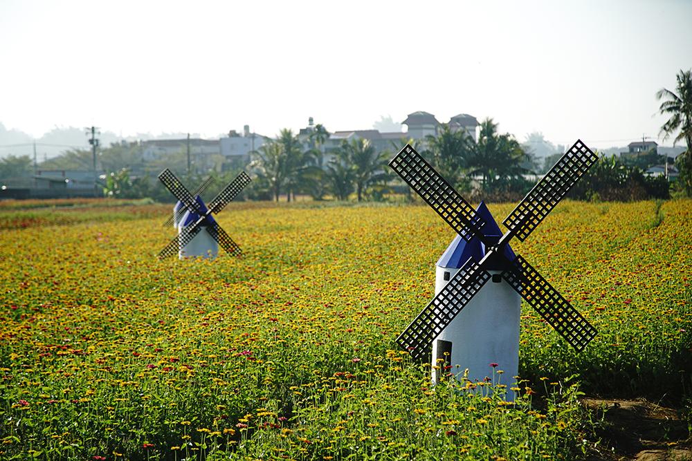 和穀倉風車拍照打卡,超有異國風情。(攝影/曾信耀)