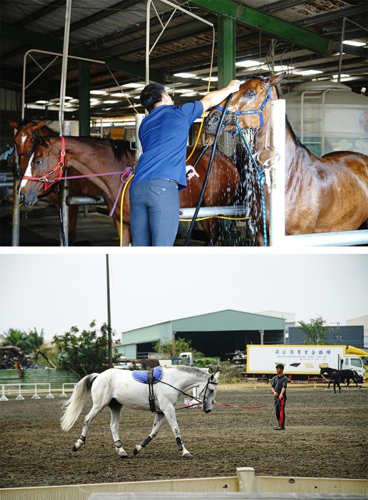 無論想要當選手、教練、馬事人員,每個人都必須要基礎訓練,所有馬場事務都要學習。(攝影/曾信耀)