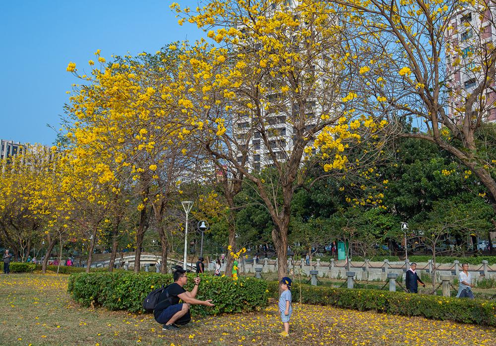 帶著孩子在樹下取景,留下美好回憶。(攝影/新聞局黃敬文;拍攝地點/新莊仔路旁河堤公園)