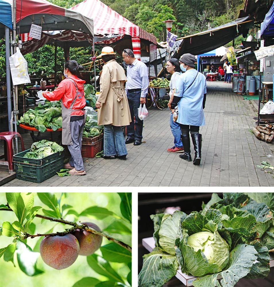 梅山小農市集採買高山高麗菜、當季蔬果,支持好農物。(攝影/曾信耀)