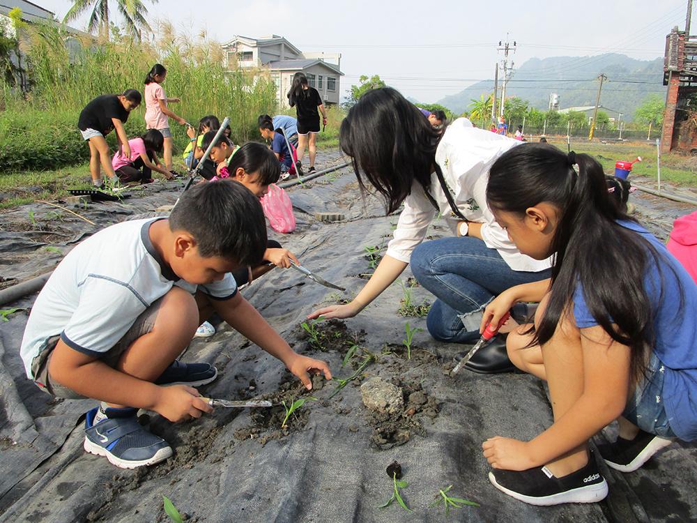 蔬菜田種植玉米、蘿蔓等,幼稚園學生參與育苗,高年級學生植苗,低中年級除草。(照片提供/莊宗霖)