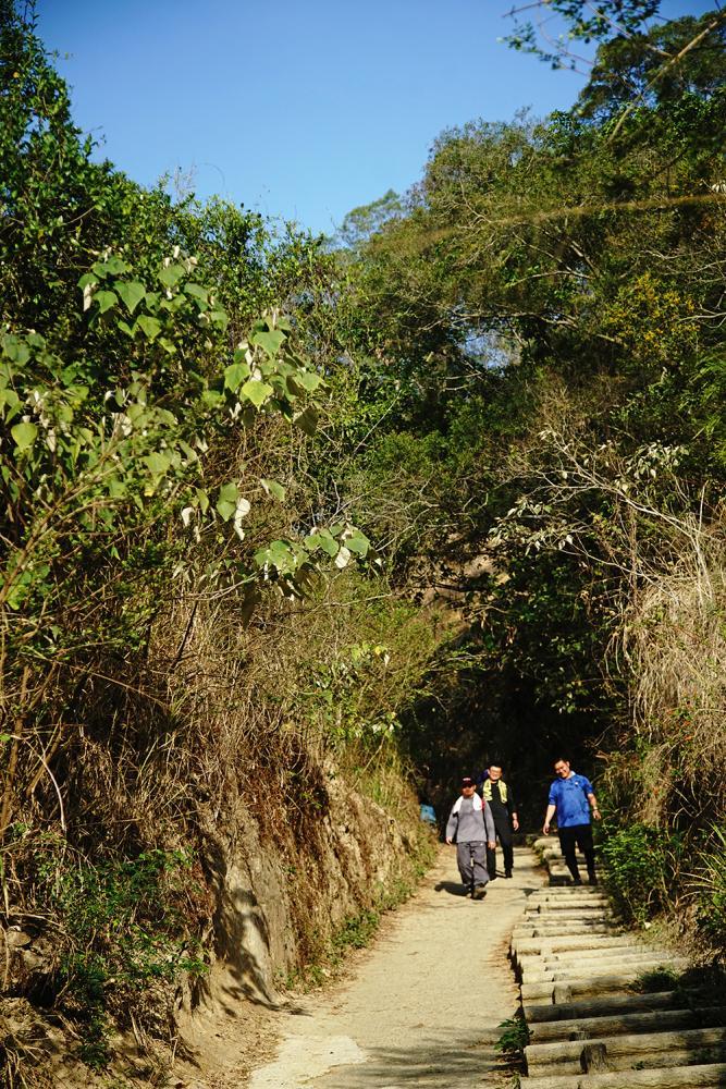 觀音山步道夾道覆蓋綠蔭,清晨來爬山的山友特別多。(攝影/曾信耀)