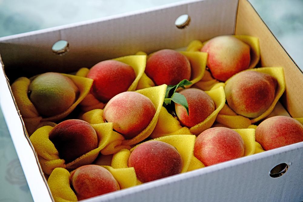 寶山部落的水蜜桃果型小,肉甜多汁。(攝影/曾信耀)