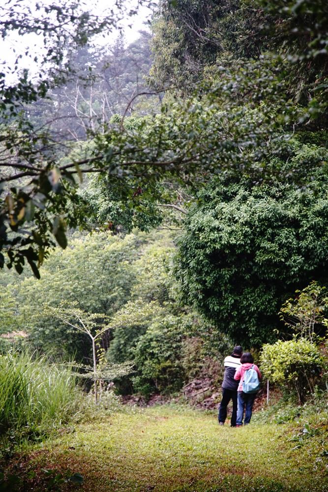 部落裡有多條自然步道,風光景色截然不同。(攝影/曾信耀)