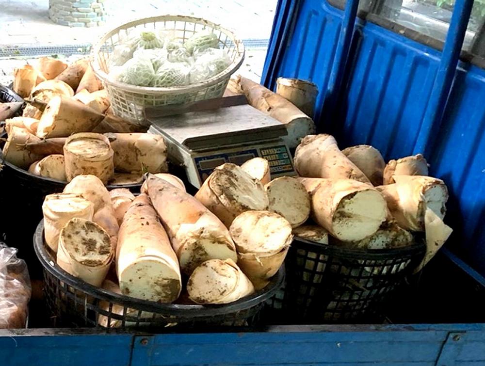 麻竹筍盛產期自農曆六月開始,中秋節前都能買到。(照片提供/蔡佳玲)