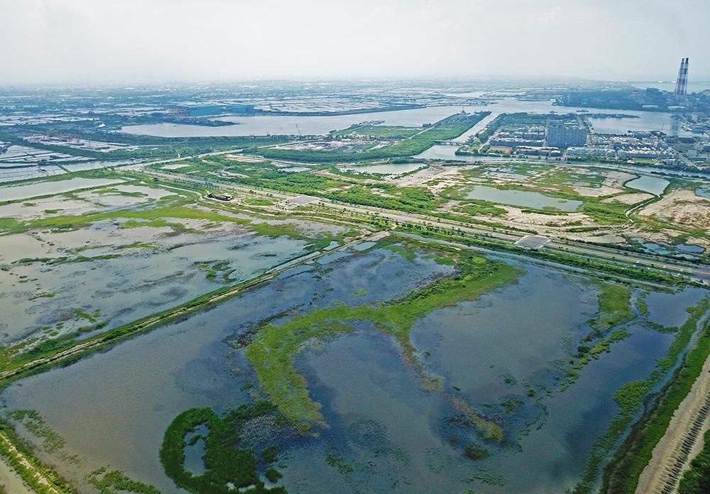 茄萣濕地全景圖。(圖片提供/高雄市茄萣區觀光發展協會)