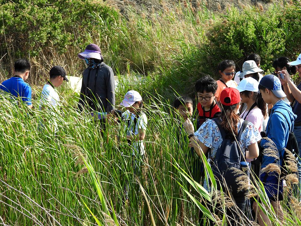 導覽老師帶著師生認識茄萣濕地,愛護自然從自身周邊環境開始。(圖片提供/高雄市茄萣區觀光發展協會)