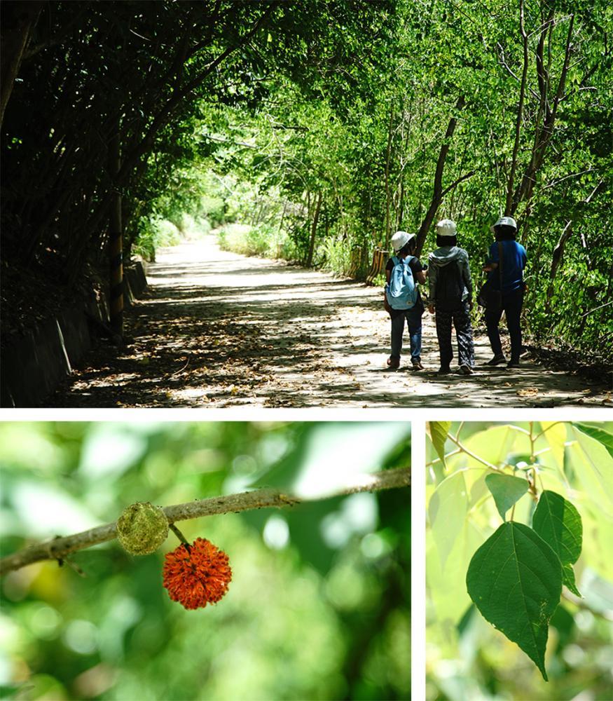 十八羅漢山自然保護區植物林相生態豐富。(攝影/曾信耀)