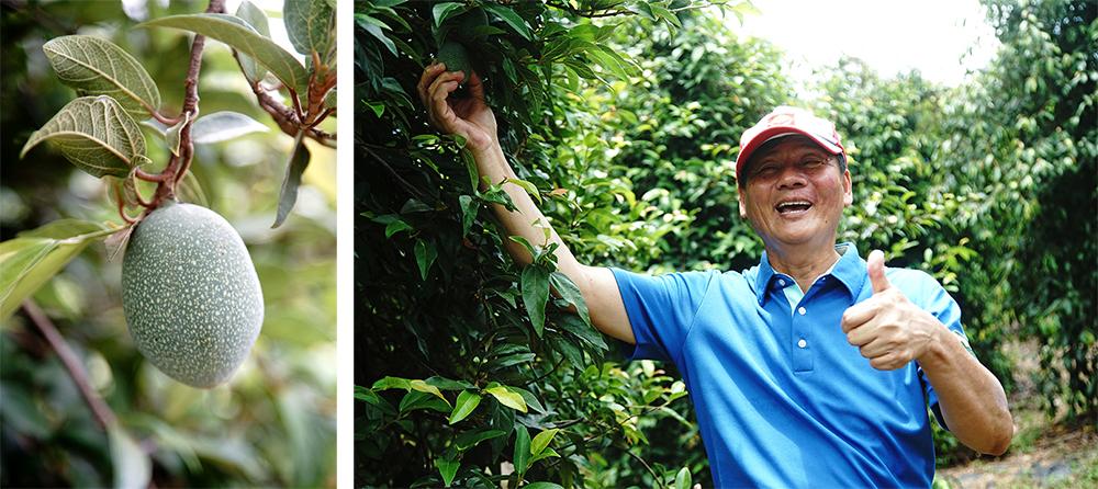 (左)愛玉子苗栗一號耐膠蟲、果大、產量高及果膠含量高。(右)吳清波除了是愛玉園農場主人,同時也受培訓成為十八羅漢山自然保護區環境保護暨解說服務人員。(攝影/曾信耀)