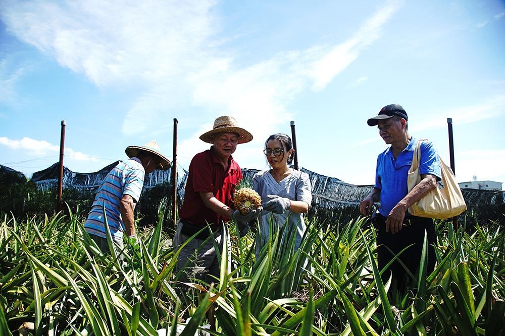 鳳梨的食農教育用意,在於從栽種的過程,體會農民的辛苦,瞭解友善土地環境的重要性。(攝影/曾信耀)