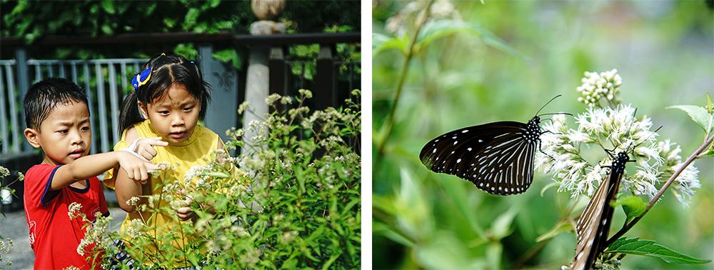 小朋友最期待的茂林雙年賞蝶季即將到來!(攝影/曾信耀)