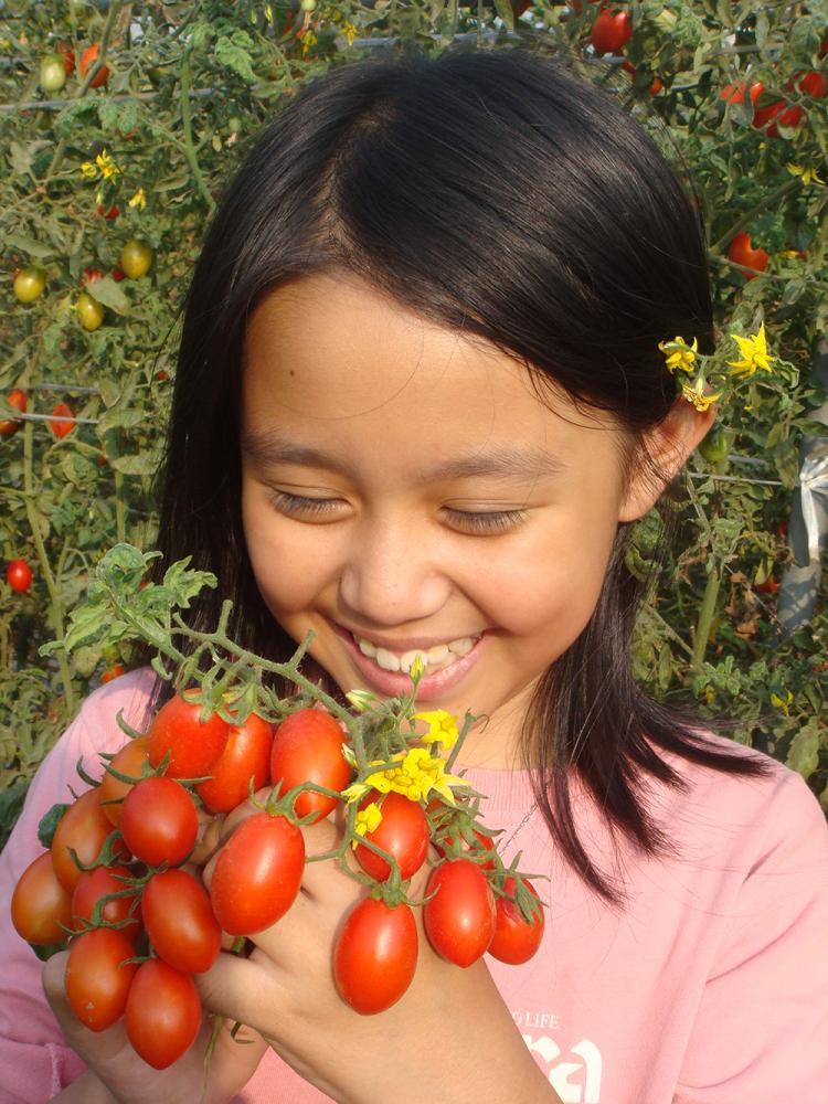 路竹番茄文化節於12月12、13日登場,歡迎大家來「番喜童樂會」。(照片提供/路竹區公所)