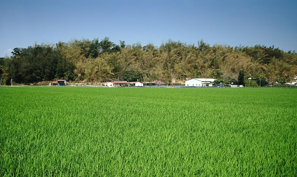 稻田、三合院就是美濃農村最迷人的生活印象。