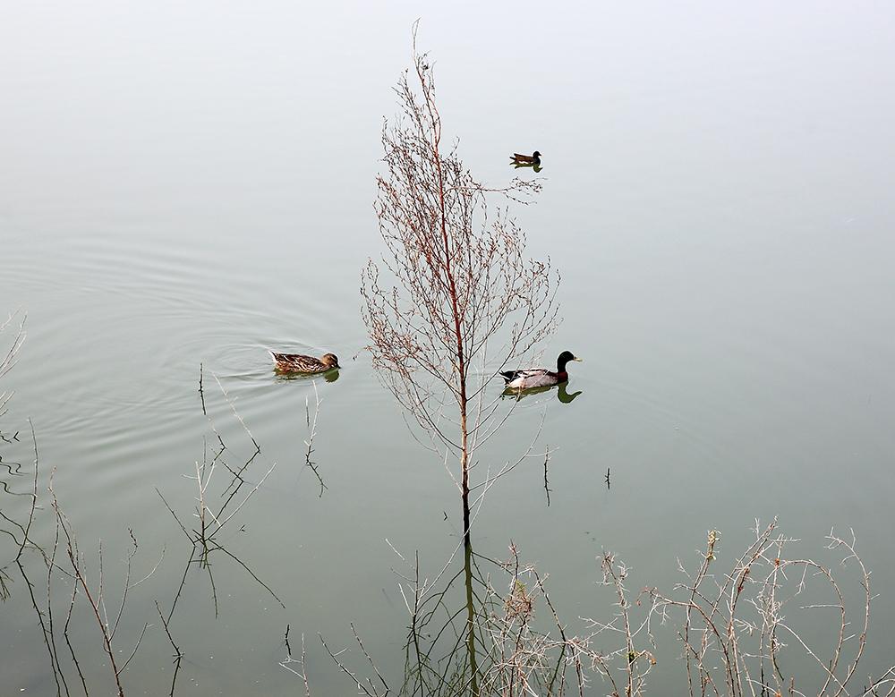 美濃湖水靜謐。(攝影/Carter)