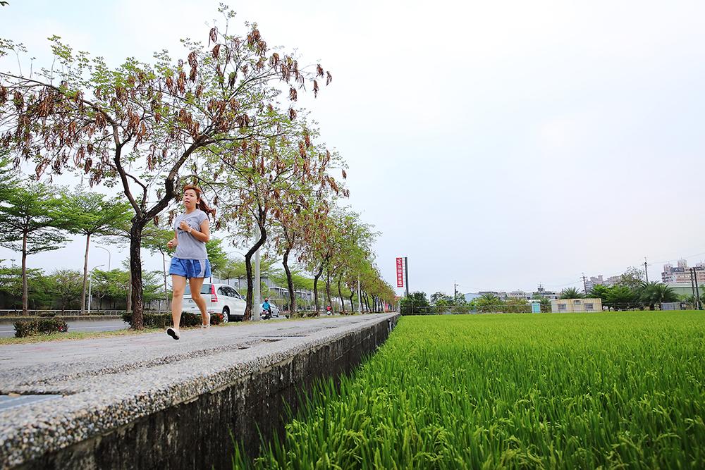 沿著捷西路、鳳東五街、環河街、萬丹路折返捷運站的大寮捷運站稻香大道慢跑路線,5公里短距離跑線輕鬆又紓壓。(攝影/Carter)