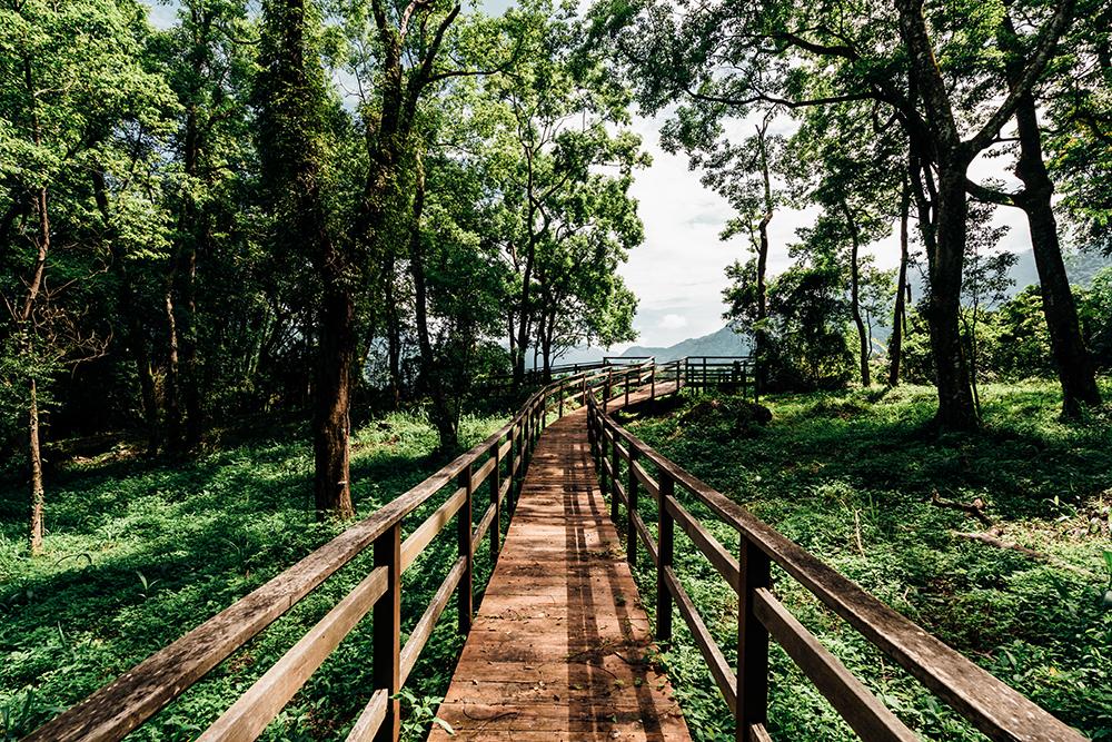 樟樹林公園擁有豐富的植物種類,是吸收芬多精的好地方。(攝影/陳建豪)