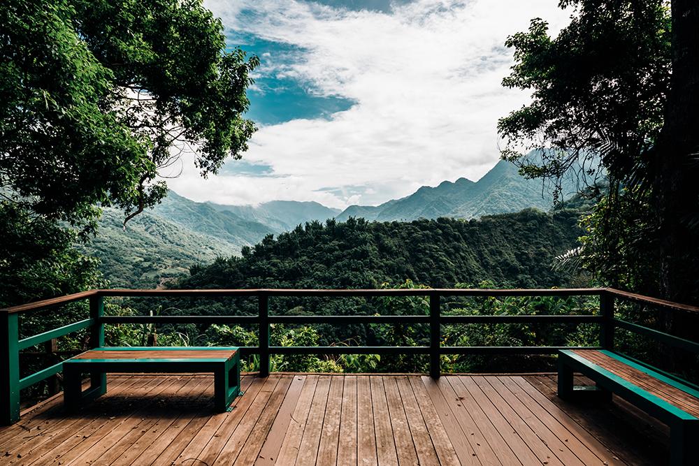 來樟樹林公園可以澈底沉浸在自然環境,對眼睛還有心靈來說都是很大的放鬆。(攝影/陳建豪)
