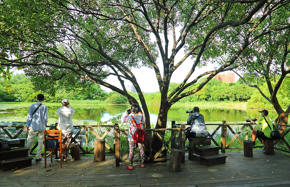洲仔濕地公園是高雄都會區的自然教室,民眾可預約導覽進入環境教育區,近距離欣賞各種生物。(攝影/Carter)