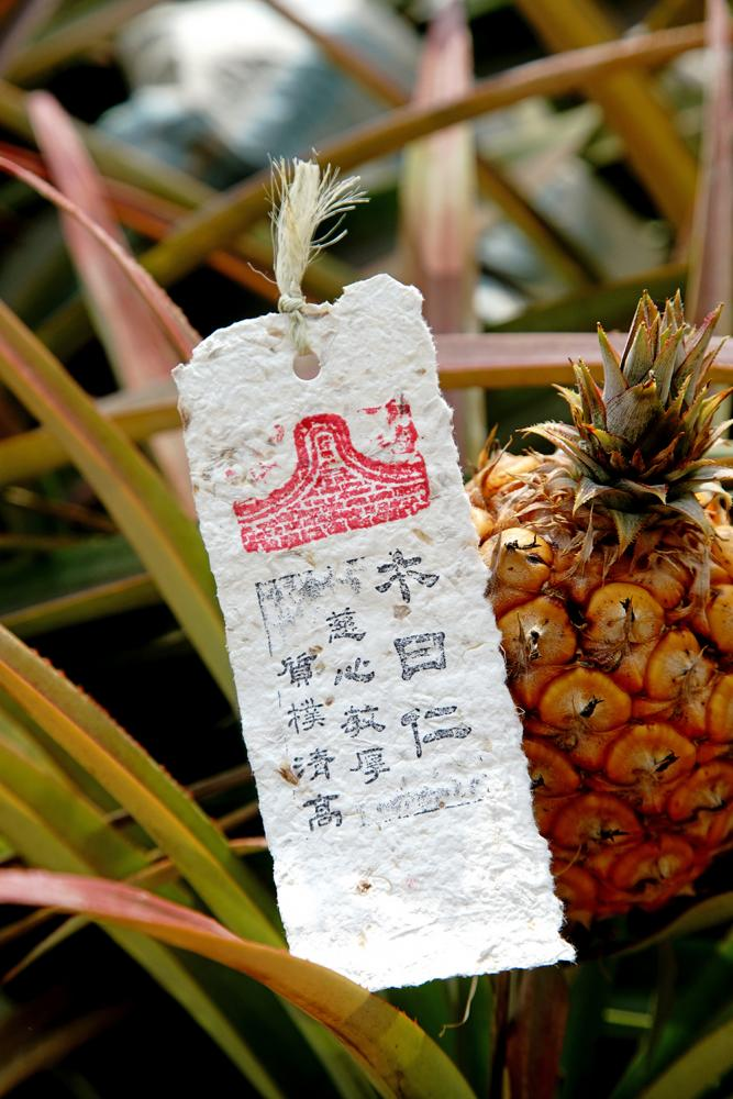 利用鳳梨纖維造紙,做成明信片、書籤。