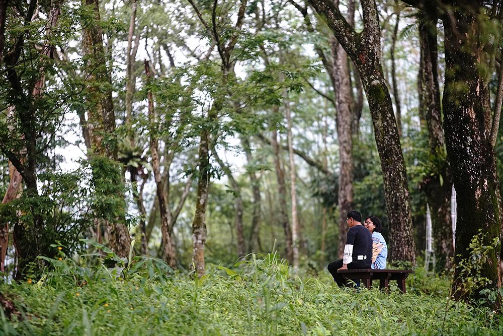 樟樹林森林浴,沐浴大自然芬多精。