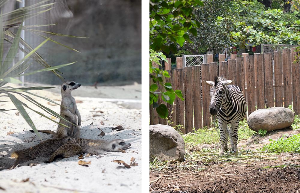 壽山動物園可愛的動物們。