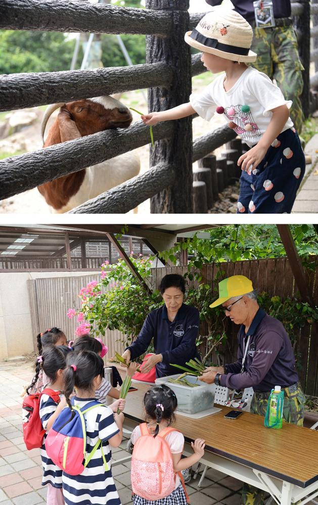 兒童牧場每天兩個時段開放小朋友餵食動物。