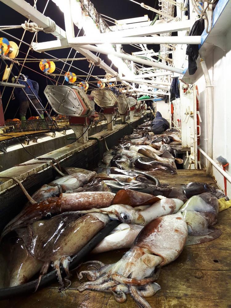 魷釣漁船返港在前鎮漁港大批卸貨。